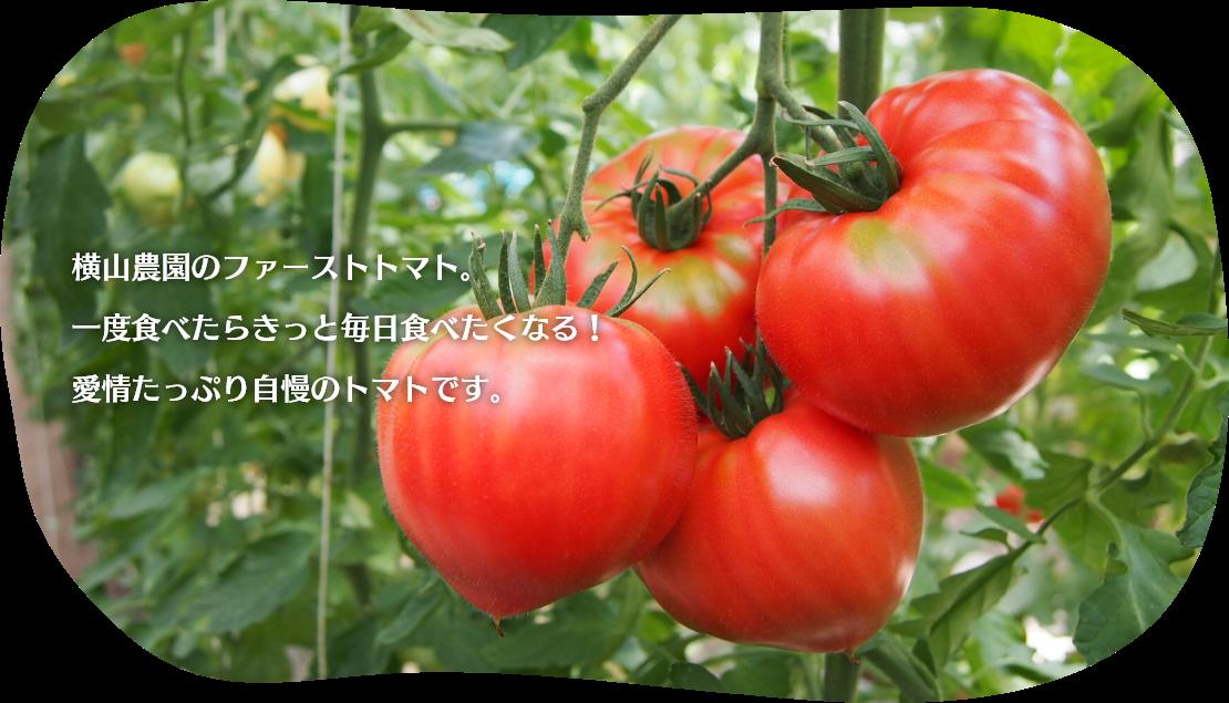 横山農園のファーストトマト。一度食べたらきっと毎日食べたくなる!愛情たっぷり自慢のトマトです。